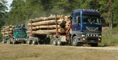 Scutul Pădurii: 10 metri cubi de material lemnos au fost confiscaţi de poliţiştii din Apuseni, în urma unui control în trafic