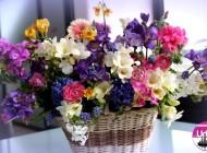 8 Martie: Ziua Internațională a Femeii. Semnificațiile istorice pentru această zi