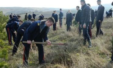 """FOTO: Acțiune de plantare de arbori în zona Ciugud a elevilor de la Colegiul Național Militar """"Mihai Viteazul"""" din Alba Iulia"""