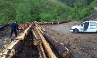 Bărbat din comuna Miraslău, cercetat de poliţişti după ce a fost prins în flagrant, în timp ce tăia arbori ilegal