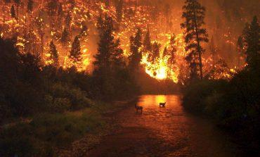 ISU Alba: Măsuri de prevenire a incendiilor la păduri