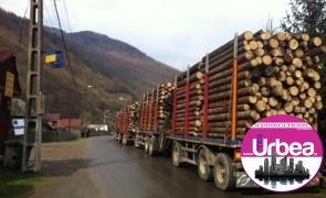 Scutul pădurii: 12 metri cubi de material lemnos, confiscaţi de poliţiştii din Ciuruleasa