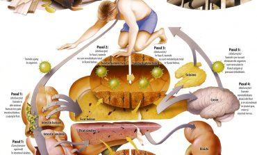 Cum detoxifiem organismul după Sărbători: Dieta minune
