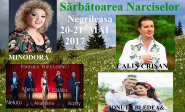 """20-21 mai: """"Sărbătoarea Narciselor"""", în Poiana Narciselor din comuna Negrileasa. Programul manifestărilor"""