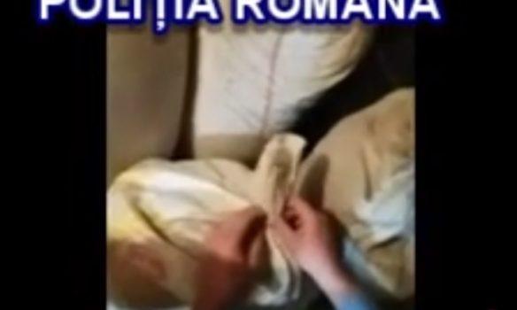 VIDEO: 105 kilograme de tutun și aparate de confecționare a țigaretelor, confiscate în urma unor percheziţii la Alba Iulia, Unirea și Lunca Mureșului