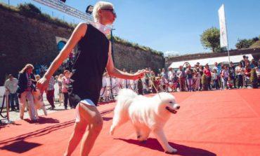 Sâmbătă și duminică: Royal Crown Trophy 2017. 350 de câini, din 16 țări europene, se vor întrece în Cetatea Alba Carolina