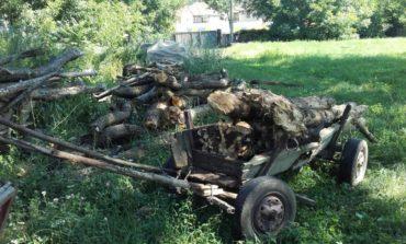 FOTO: Trei tineri, amendaţi de jandarmii blăjeni cu 2.500 de lei fiecare pentru furt de lemne