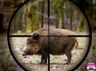DSVSA Alba transmite regulile de biosecuritate care trebuie respectate în timpul partidelor de vânătoare, în urma confirmării unor focare de pestă porcină africană