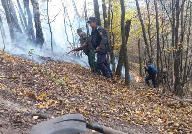 FOTO: 10 hectare de pădure, mistuite de flăcări la Săciua. Detalii despre cum a fost stins focul ce a ars două zile