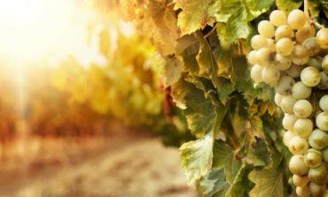 Asociația Țara Vinului a sărbătorit 10 ani de la infiinţare