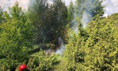 FOTO: Exercițiu pentru gestionarea situaţiilor de urgenţă generate de incendii la pădurile din Ocoliș și Poșaga