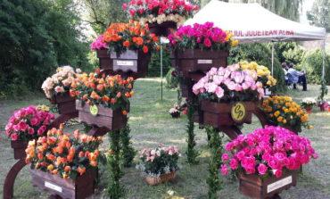 """30 IUNIE: A XVII-a ediție a evenimentului plin de culoare şi parfum """"Ziua Rozelor"""", la Aiud. PROGRAM"""