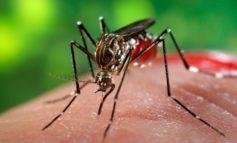 (UPDATE) DSP Alba: Al doilea caz de infecție cu virusul West Nile, confirmat în județul Alba. Bărbatul a decedat, vineri, la Spitalul Județean de Urgență Alba Iulia