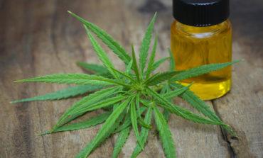 Ce trebuie să știi despre remediile naturiste pe bază de ulei de canabis