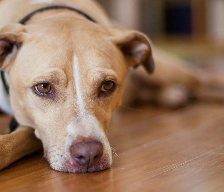 14-15 septembrie: Campanie de sterilizare gratuită a câinilor la Alba Iulia