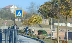 Peste 100 de copaci, 1200 arbuști ornamentali și 66000 de flori – parte din campania de refacere a zonelor verzi din Alba Iulia