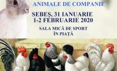 31 ianuarie - 2 februarie: Expoziție columbofilă, la Sebeș