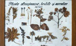 Impresionanta poveste a planșelor-ierbar realizate de Alexandru Borza, primele exponate înregistrate în Registrul de Inventar al colecției de științele naturii aparținând Muzeului din Sebeș