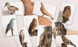 Sebeș: Concurs online inedit, te teme de ornitologie, dedicat elevilor