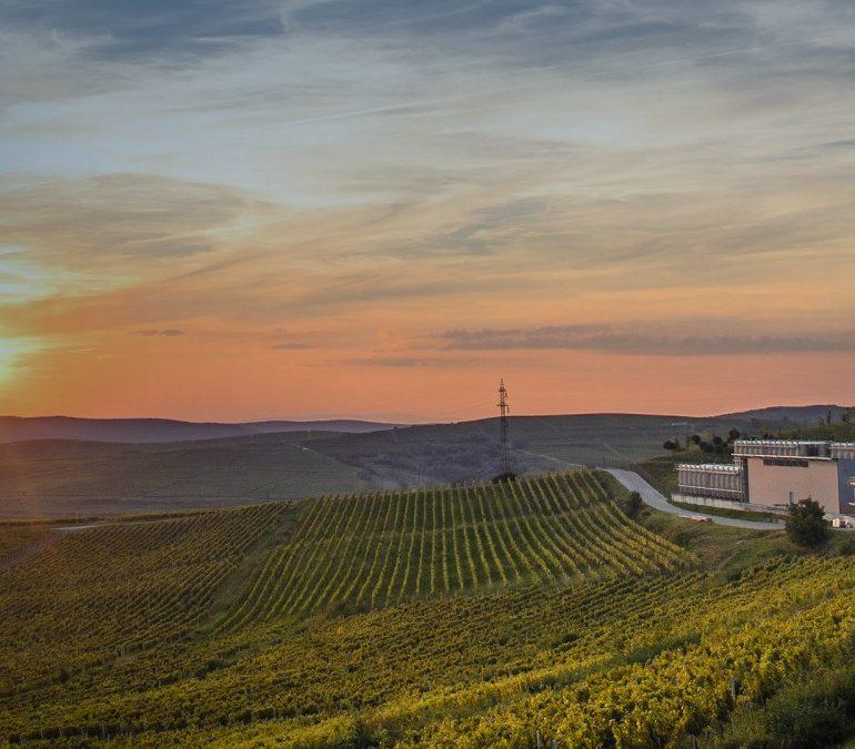 Noua campanie Jidvei aduce adevăr, optimism și vinuri bune