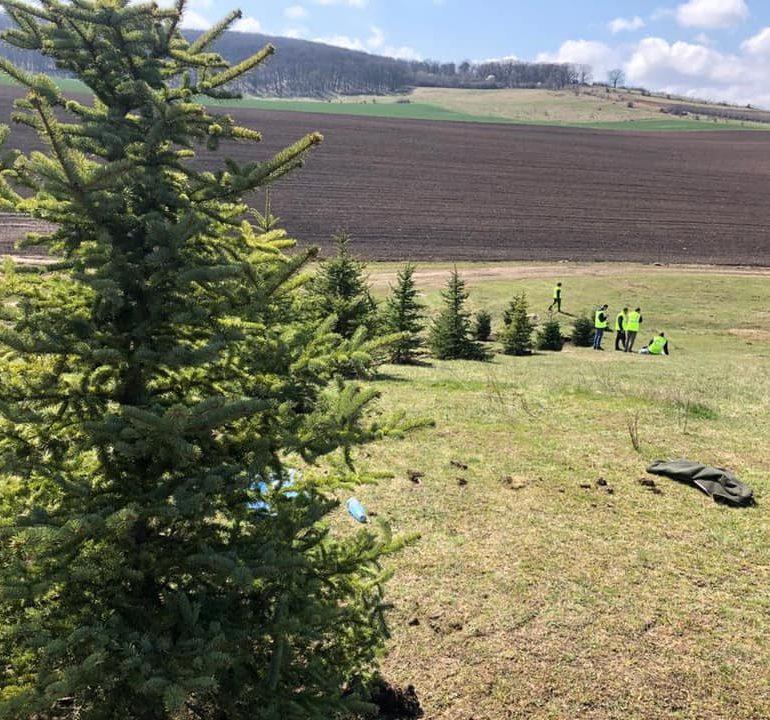 """Campania """"Un copac pentru fiecare locuitor al municipiului Sebeș"""", în plină desfășurare"""